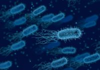 bacteria-3662695_1280