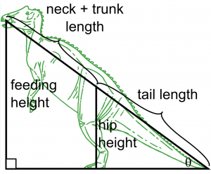 Adapted from Fig 2 Mallon et al BMC Ecology