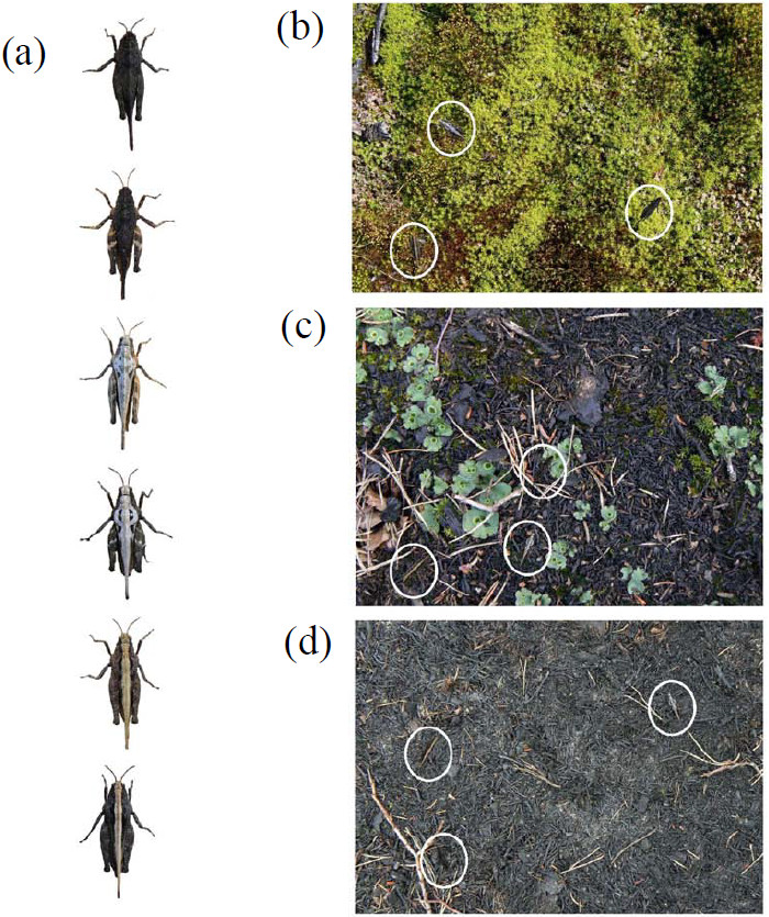 Fig 2 Karpestam et al BMC Ecology 2013 13, 17