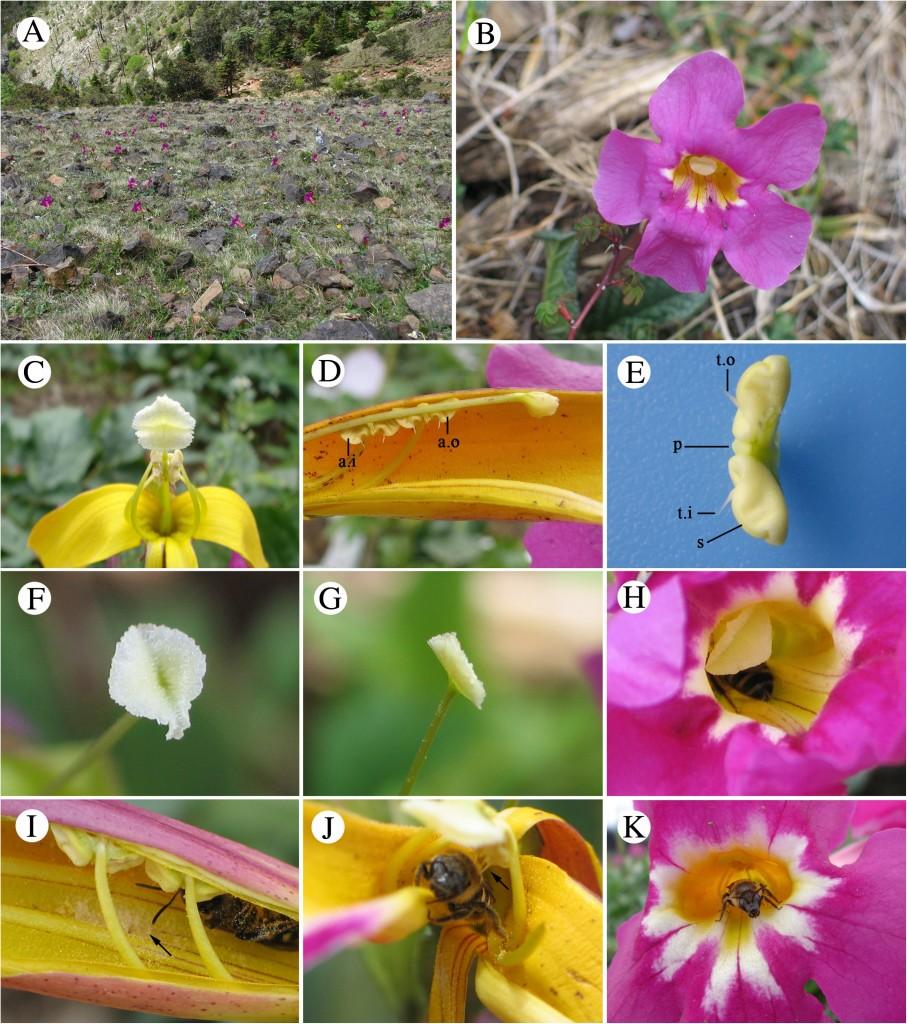 Ai et al. BMC Plant Biology 2013