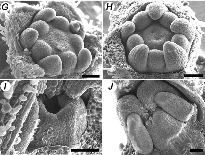 Xiao et al. BMC Plant Biology 2009