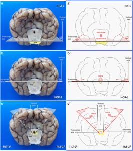 Matiasek et al. - Figure 6 - http://0-www.biomedcentral.com.brum.beds.ac.uk/1746-6148/11/216