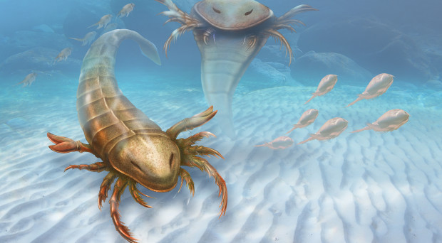 An artist's rendition of the sea scorpion