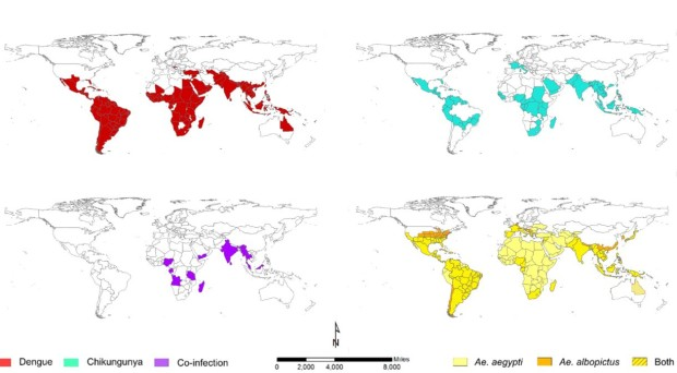 The global distributions of chikungunya, dengue and co-infection