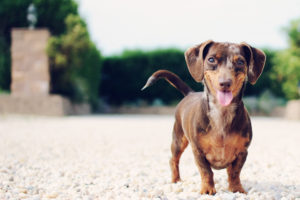 smilling-dog-allen-skyy-flickr-cc