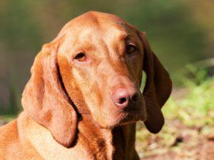 dog-1190024_1280