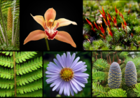 Diversity_of_plants_image_version_edit