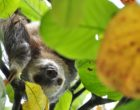 Two Toes Sloth Tropical Rainforest Sloth Jungle