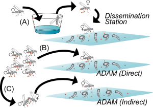A diagram comparing the ADAM and the dissemination station based methods