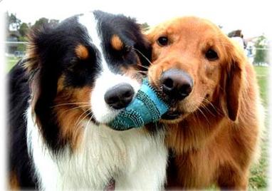 Twin dogs. Source: Wikimedia commons