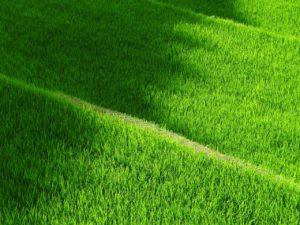 rice-terraces-419770_1280