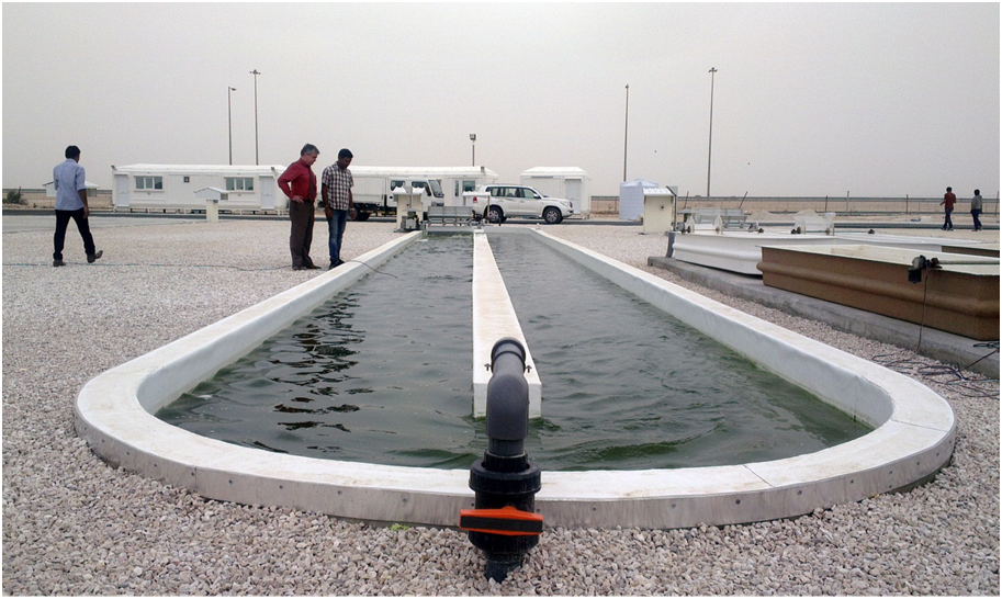 Dr. Malcolm Potts, the principal investigator, and Dr. Probir Das of the biofuel team and chief scientist involved in outdoor growth are next to one of the 25,000 liter raceway ponds of the demo plant