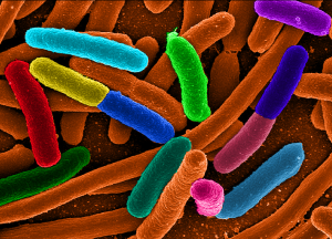 False colour E. coli