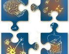 2014-04_thematic series_brain-gut-jigsaw- crop
