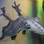 gecko_Wikipedia_blog