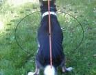 Dog_compass