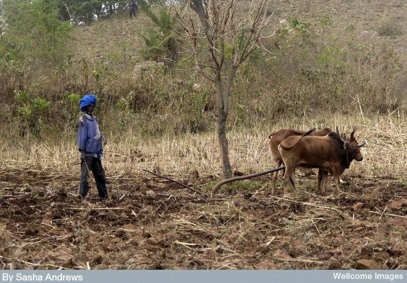 Ethiopia farming