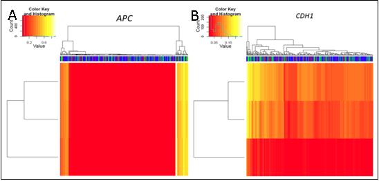 Representative heat maps for the Infinium HumanMethylation450 beadchip array methylation analyses for the TCGA HNSCC cohort. These heat maps represent methylation of A) APC and B) CDH1 (Please see the article for full details).