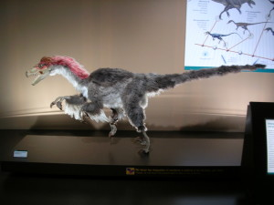 Velociraptor (source: WikiMedia, created by Noemy Garcia Garcia, cc-by-sa-2.5-es)