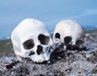 Skulls – no copyright