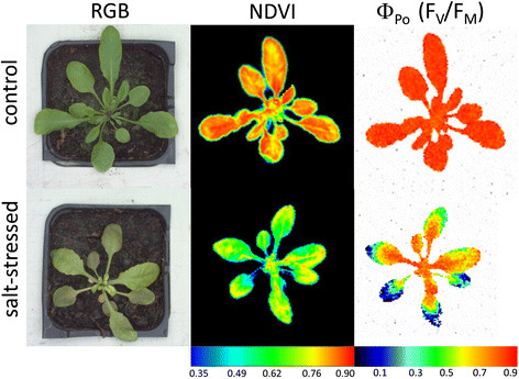 Simultaneous analysis of control and salt-stressed Arabidopsis plants, using RGB, hyperspectral and Chl fluorescence imaging