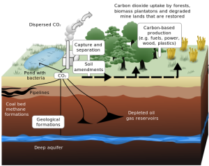 A diagram showing the processes of CO2 capture and sequestration, with application for biofuels and natural development.