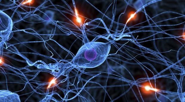 Neurons (medium)