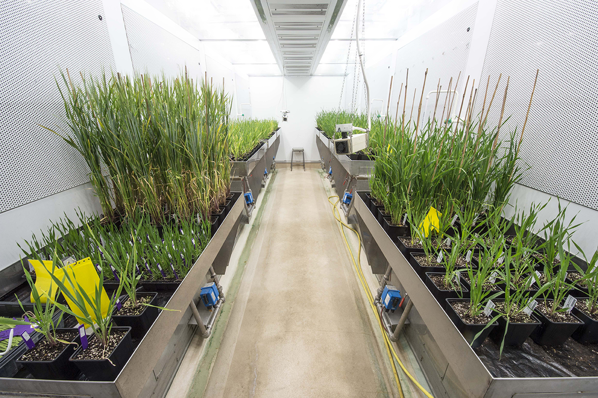 Growing crops in the lab