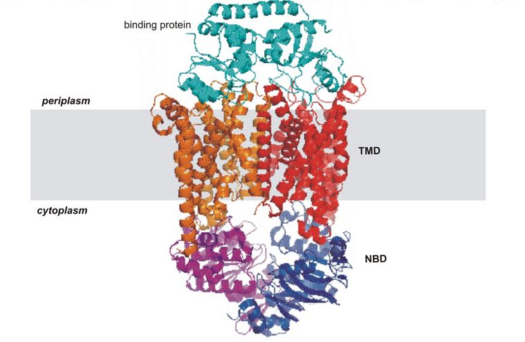 Structural asymmetry in proteins functioning as ATPases