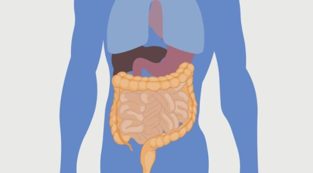 What can gut bacteria tell us about the risks of type 2 diabetes?