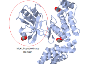 Pseudoenzyme structure, taken from Wikipedia