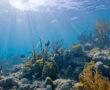 800px-Biscayne_underwater_NPS1