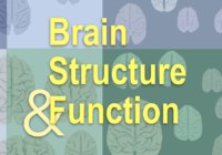 Brain Structure and Function cover