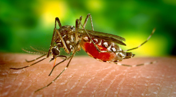 A deadly vector - the media has already pegged 2016 as 'the year of Zika'
