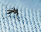 Could insufficient understanding of Zika create irrational fear?