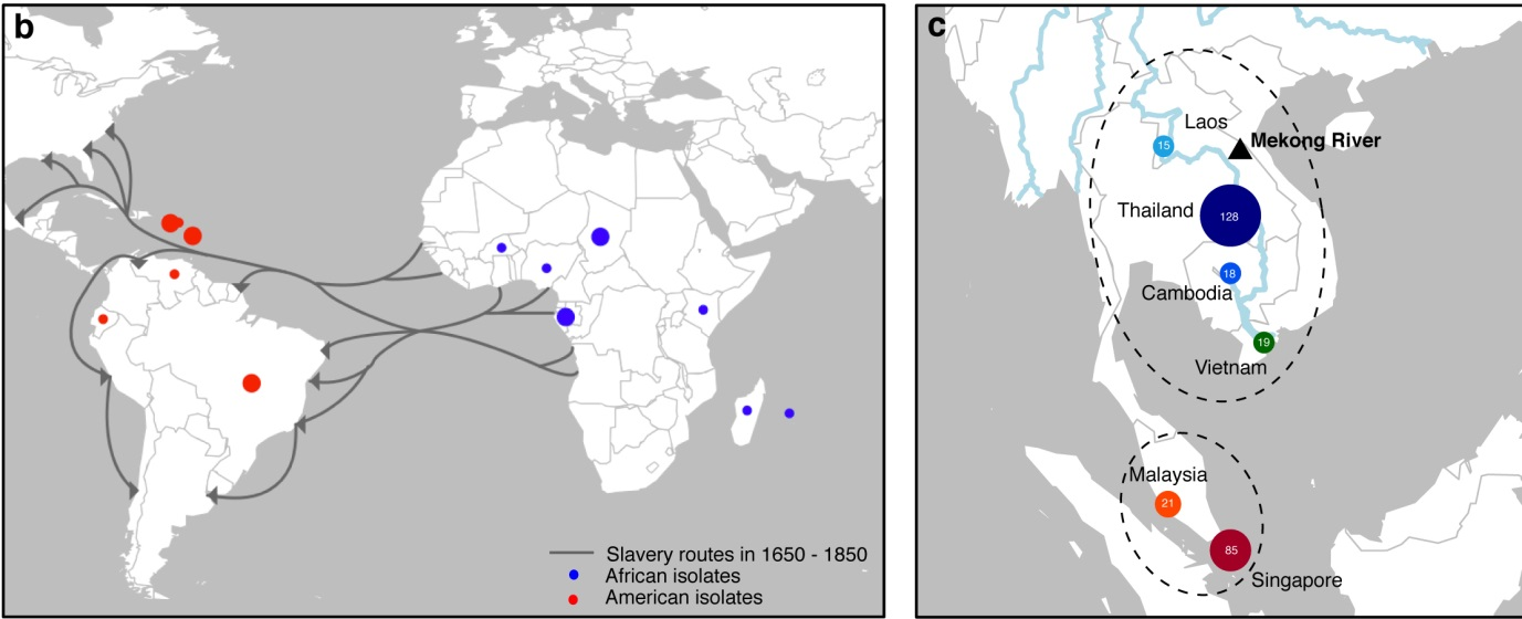 Transatlantic slave trade routes and sampling locations.