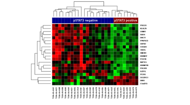 Enriched genes in HER2-positive breast cancer patients