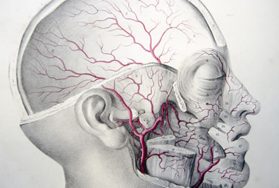 GPA affects small- and medium-sized blood vessels, particularly of the sinuses, upper airways and skin