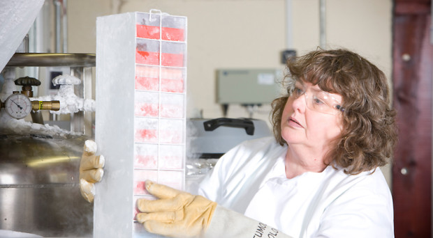 Frozen tissue samples being assessed at Barts Hospital Tissue Bank