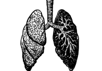 lungs-37825_1280