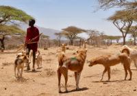 Maasai boy with dogs